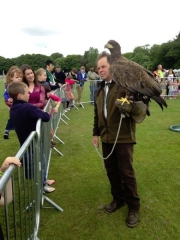 Falconry Events