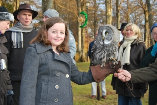 Handling Great Grey Owl