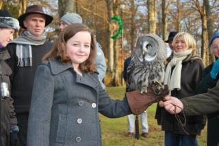 Handling Great Grey Owl
