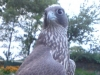 Black Female Gyr